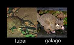 Universalitas Evolusi Otak